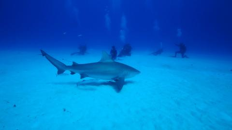 Shark School with Pro Dive International