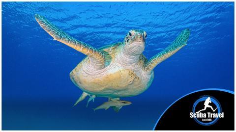 Scuba Travel Turtle