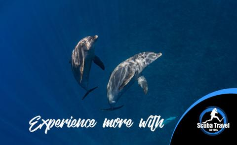 Scuba Travel experience more image